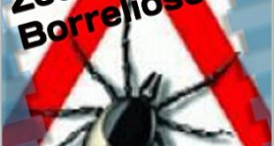 Zecken Borreliose Die neue Seuche Eine Epidemie hinterlaesst Spuren 310x165 - Zecken-Borreliose: Die neue Seuche - Eine Epidemie hinterlässt Spuren